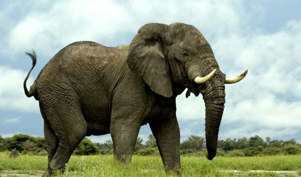 עובדות מדהימות על בעלי חיים