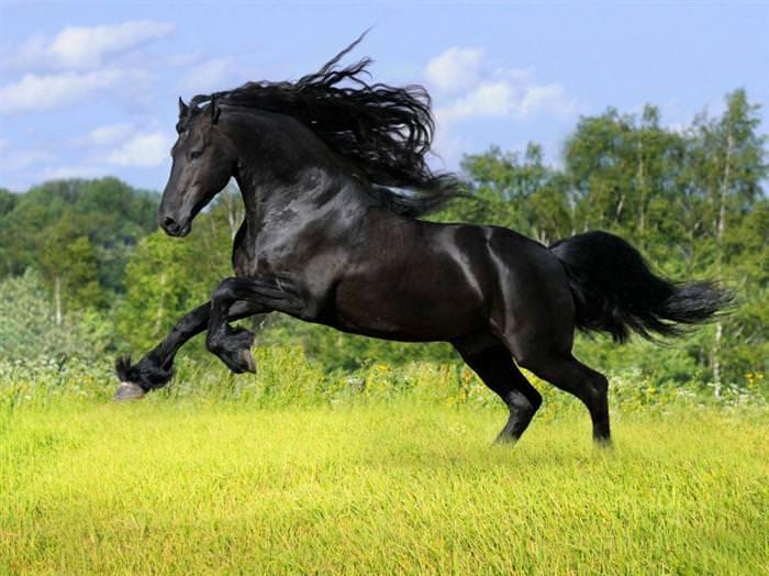 סוסים עם שיער