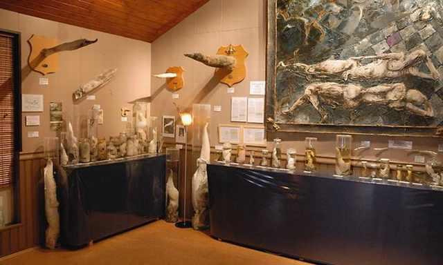 מוזיאונים מיוחדים