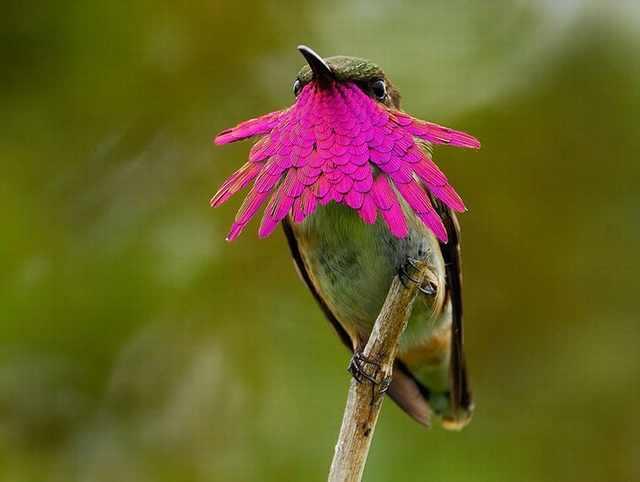 ציפורים יפות