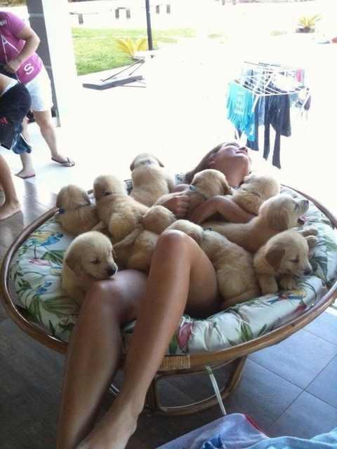 מתקפת גורי כלבים כל כך חמודים שפשוט ימיסו לכם את הלב!