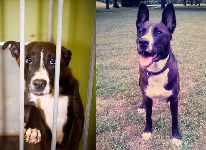 כלבים לפני ואחרי אימוץ