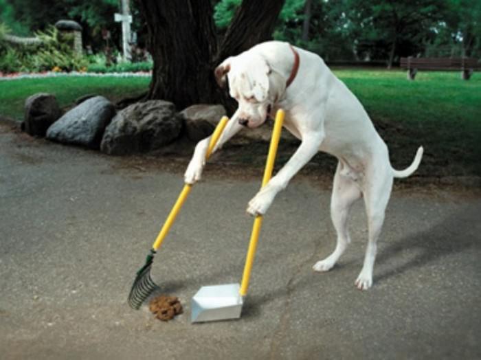 כלבים עצמאיים