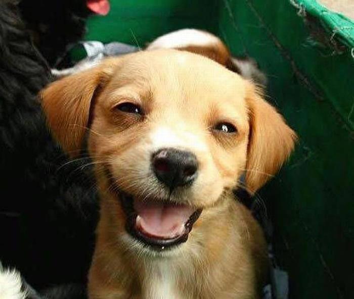כלבים מחייכים