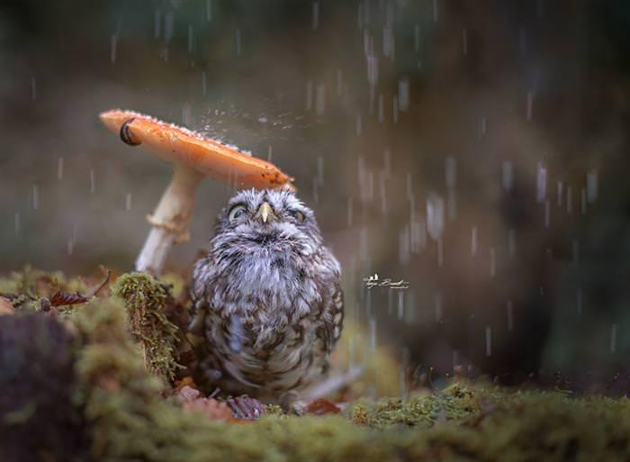 חיות חמודות בסתיו