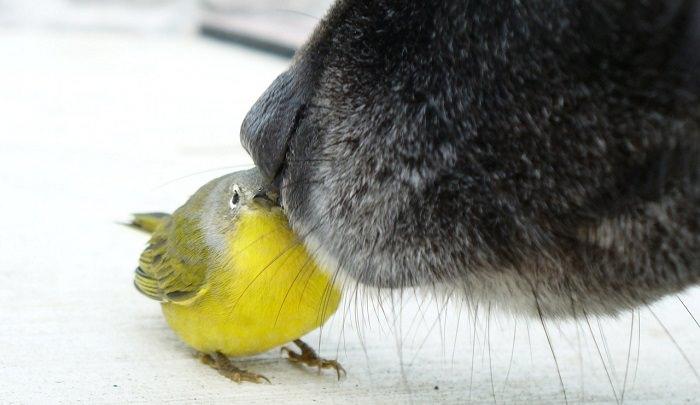 שיעורים ולקחים לחיים מכלבים