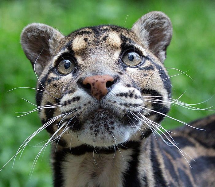 מיוחדים 15 סוגי חתולים פראיים שלא הכרתם | מן הטבע - בא-במייל QI-16