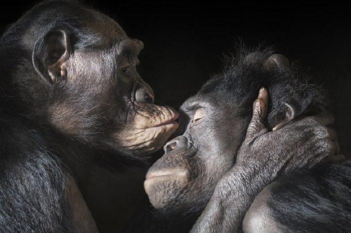 חיות שמביעות רגש