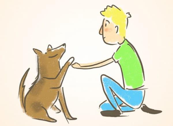 איך ללמד כלבים טריקים: איך מלמדים כלב לתת יד