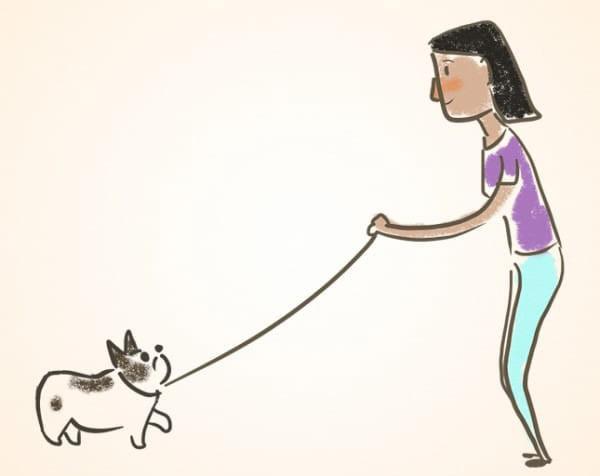 איך ללמד כלבים טריקים: איך ללמד כלב לבוא לפי קריאה