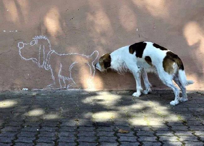 כלבים ברגע הנכון