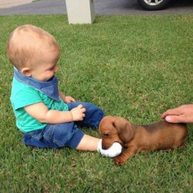 ילדים פוגשים כלבים