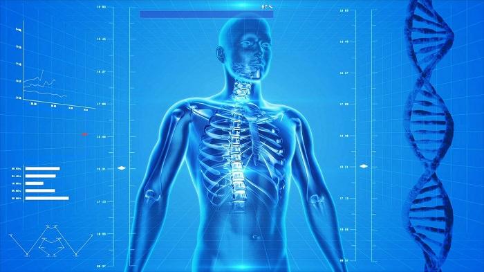 גוף האדם במספרים