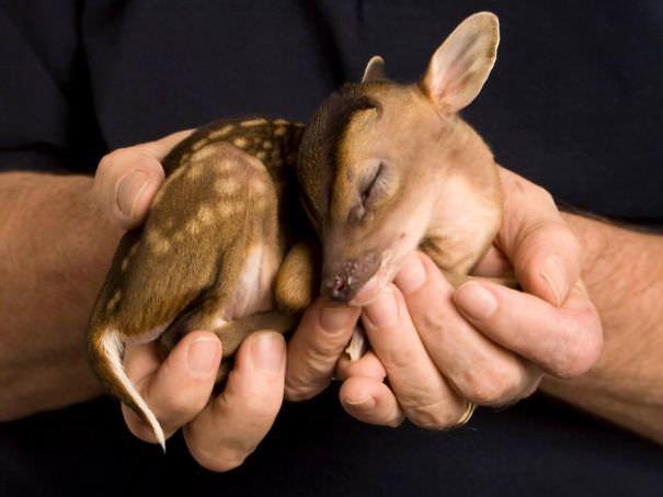 חיות בכף היד