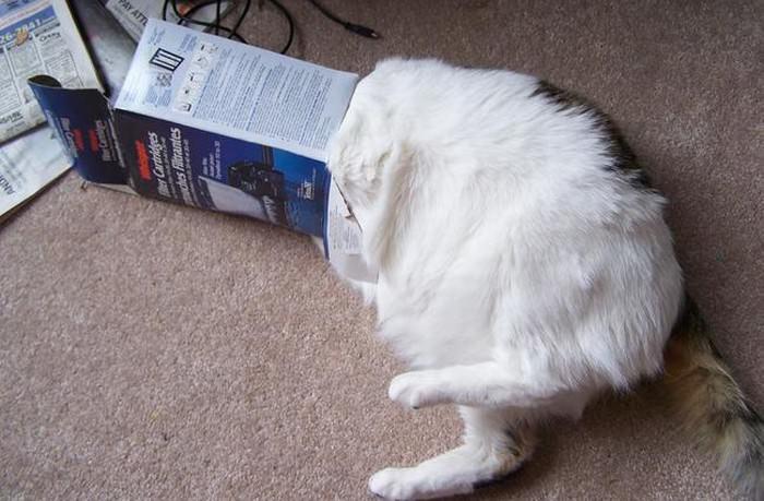 חתולים תקועים