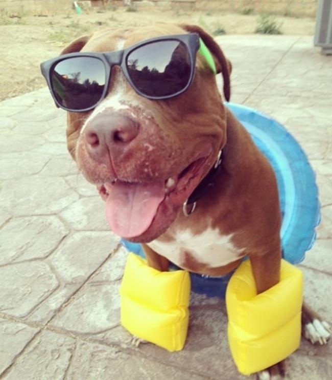 Image result for כלבים תמונות מצחיקות