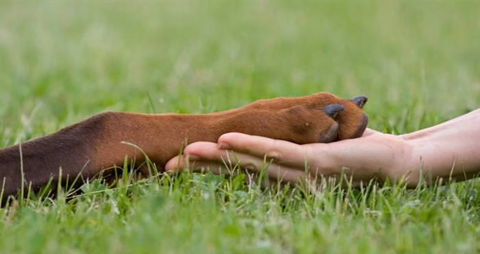 נקודות לחיצה לכלבים