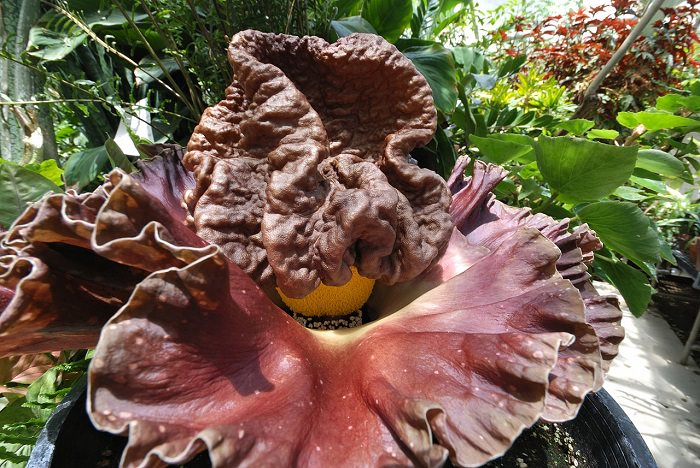 הפרחים והצמחים המעניינים בעולם
