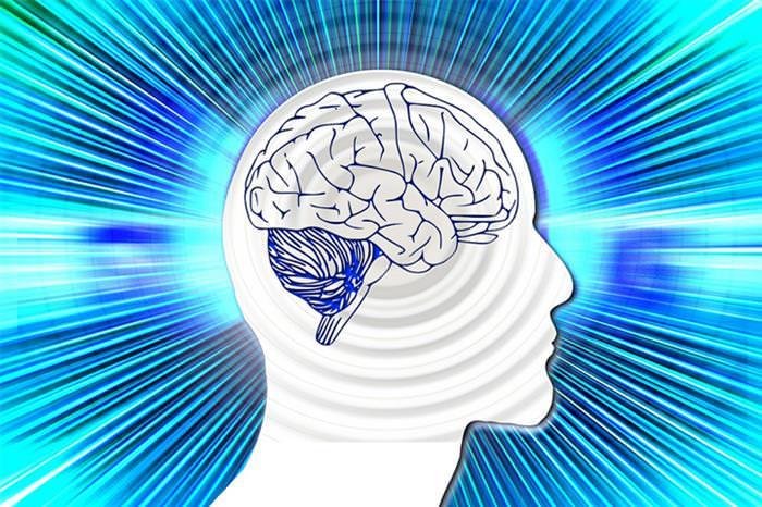 ירקות ופירות למוח