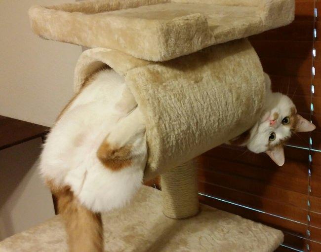 חתולים שחייבים לצלם
