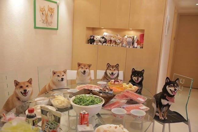 משפחת הכלבים
