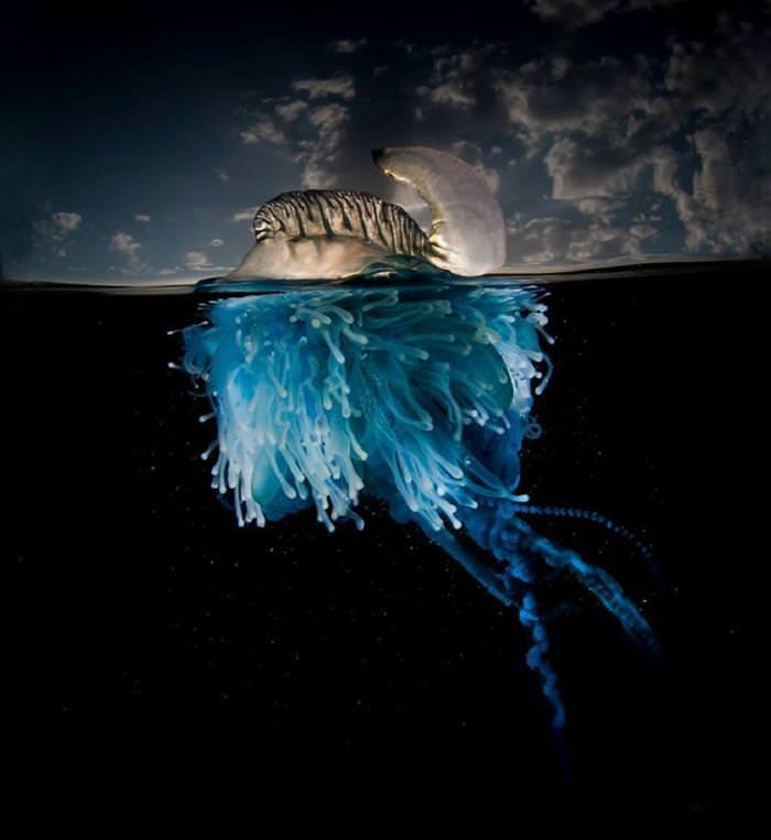 תמונות מקו המים תת-מימי