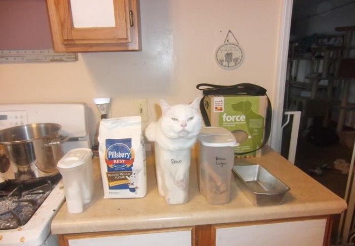 היגיון חתולי