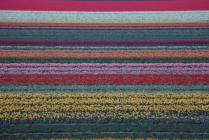 שדות פרחים