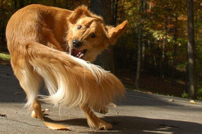 עובדות מפתיעות על כלבים