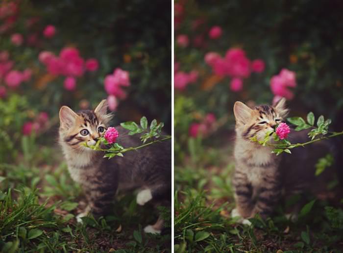 חיות מריחות פרחים