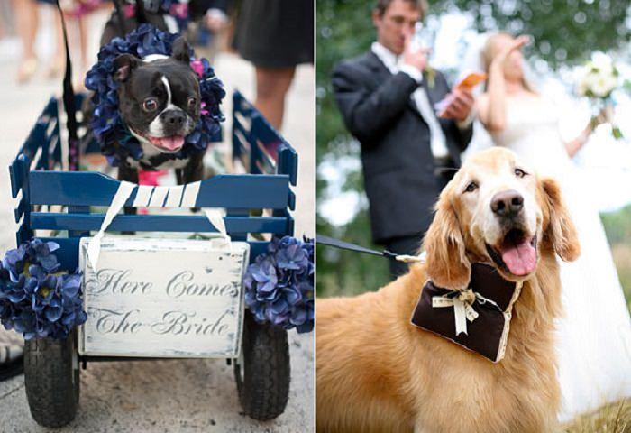 חיות משתתפות בחתונה