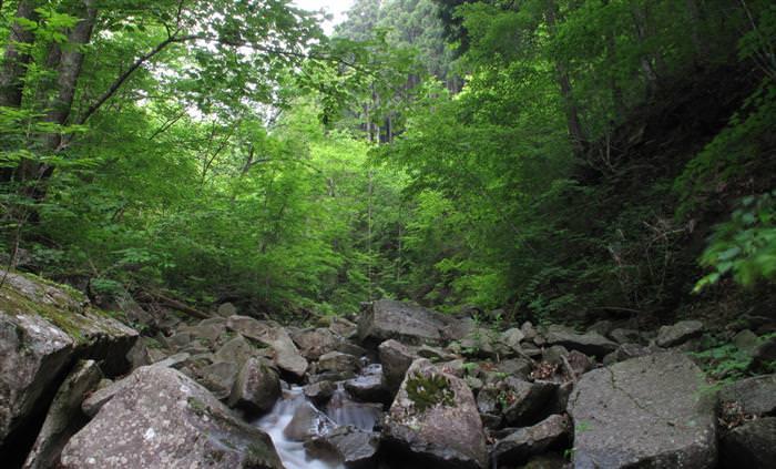 מפת צלילי הטבע
