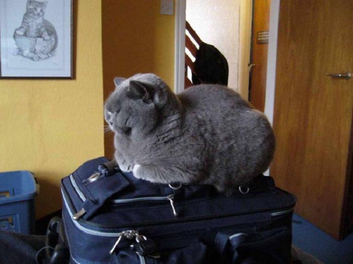 חיות שרוצות לצאת איתנו לחופשה