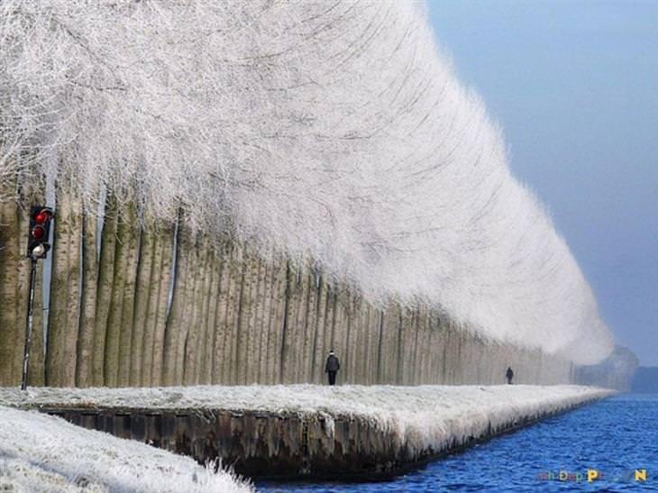 שדרת עצים מושלגת