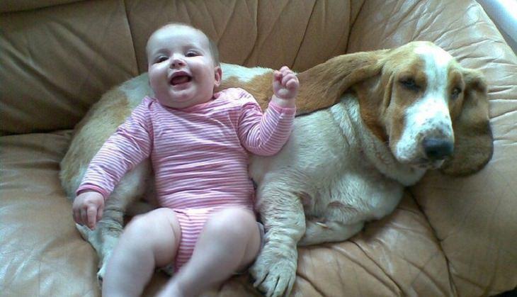 תינוק נשען על כלב