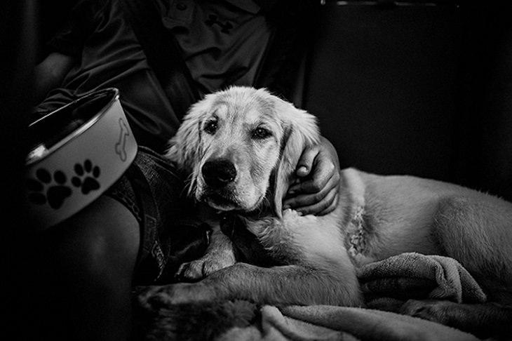 ילד מתכרבל עם כלב