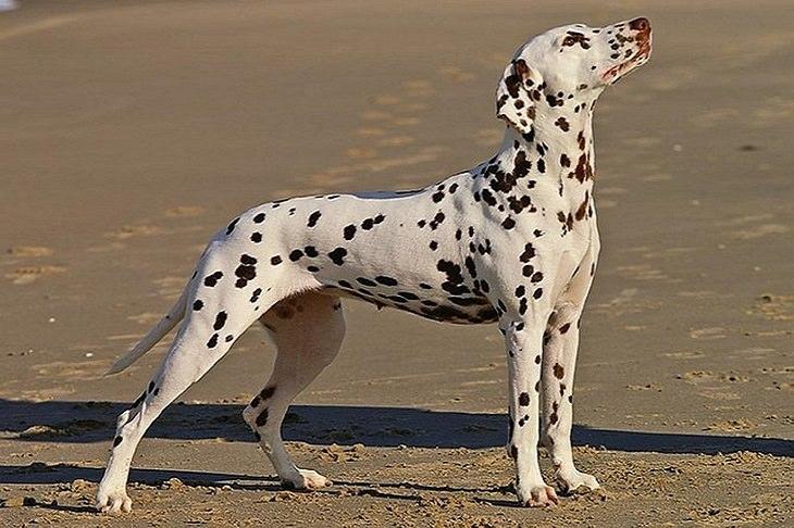 תמונות של גורים וכלבים