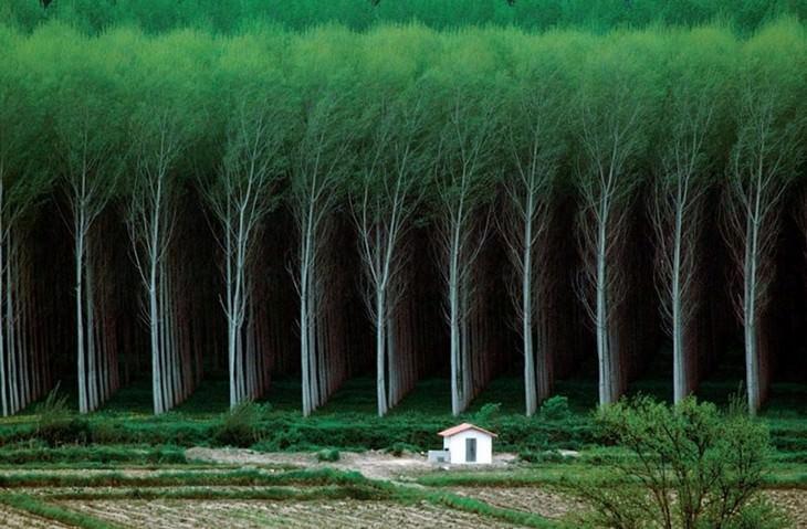 יער מסודר