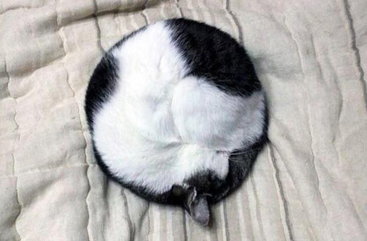 חתול ישן בעיגול