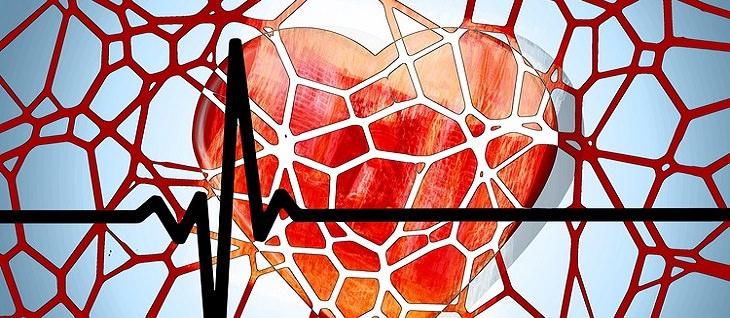 אזהרות בנוגע לזנגביל: תמונה של לב עם רקע של כלי דם
