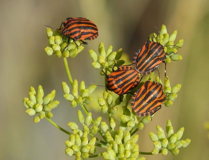 12 שימושים לפלפל מלבד בישול: חרקים מזיקים על צמח