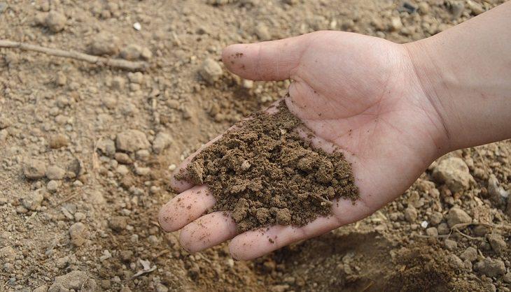 יד מחזיקה אדמה