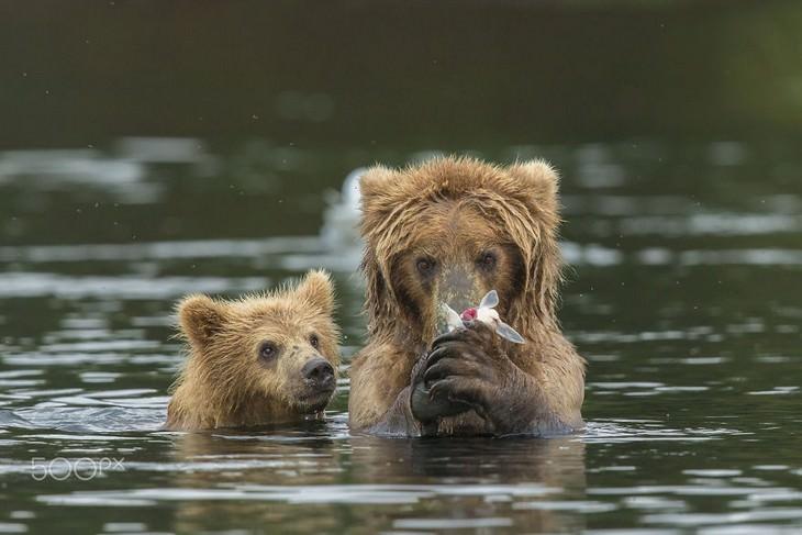 אמא דובה בתוך נהר מריחה פרח והגור שלה לידה