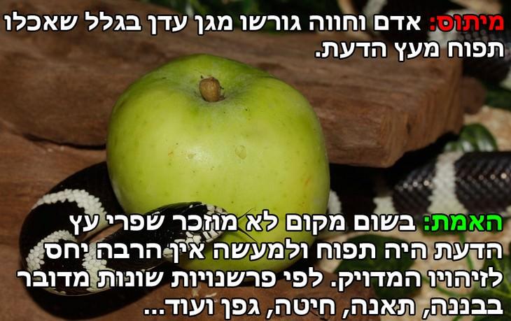 """מיתוס: אדם וחווה גורשו מגן עדן בגלל שאכלו תפוח מעץ הדעת. האמת: בשום מקום לא מוזכר שפרי עץ הדעת היה תפוח עץ ולמעשה אין הרבה התייחסות לזיהויו המדויק. לפי פרשנויות שונות מדובר בבננה, תאנה, חיטה, גפן (לפי פרשנות חז""""ל) ועוד..."""