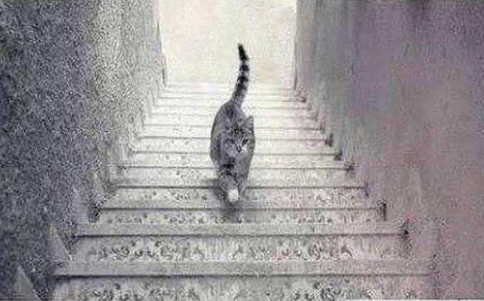חתול שיורד או עולה במדרגות
