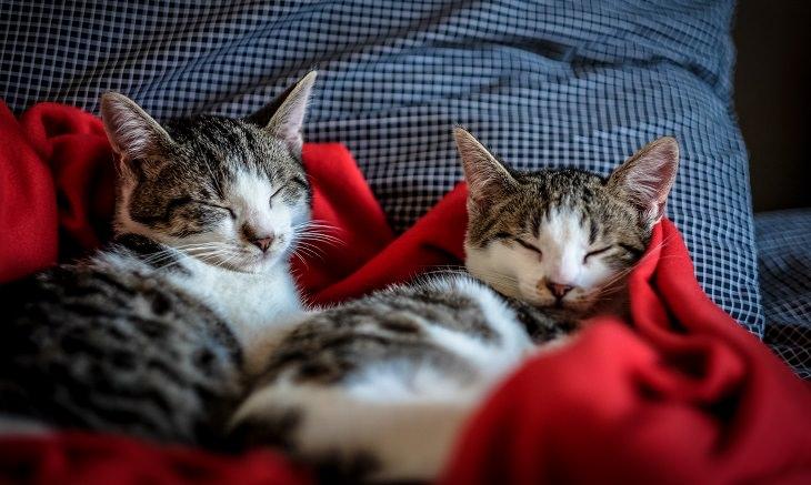שני חתולים מנמנמים