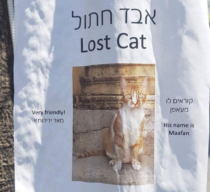 אבד חתול בשם מעאפן