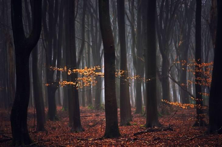 עצים כהים עם מעט עלים צבעוניים