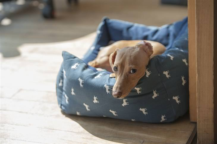 כלב ששוכב במיטה לחיות מחמד