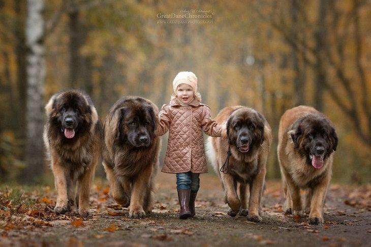 ילדה עומדת בין 4 כלבים גדולים ומחייכת